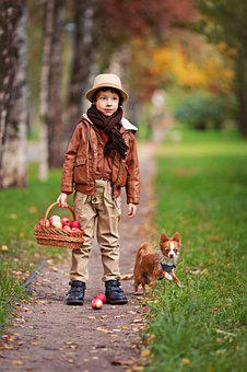 Boy, Forest, Dog, Pet, Little Dog And The Boy, Trees
