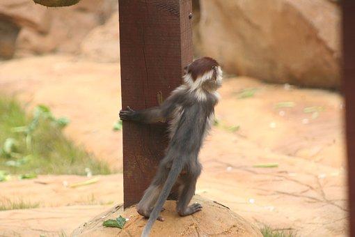 Baby, Monkey, Looking