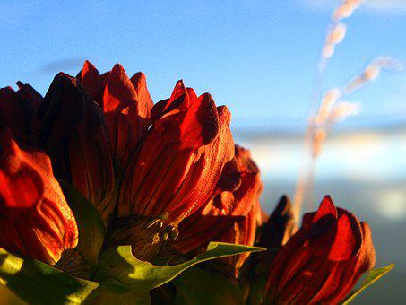 Alps, Flower, Mountain, Sky, Red, Light, Nature