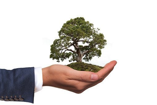 Environment, Tree, Nature, Nature Conservation, Hand