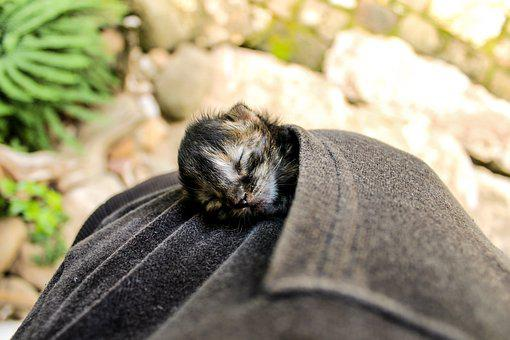 Kitten, Newborn Cat, Sleeping Kitten, Zsebcica, Animal