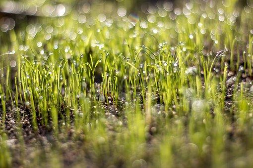 Grass, Sun, Rosa, In The Morning, Spring, Autumn