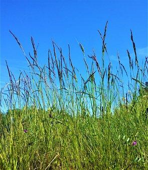 Grass, Bed, Blade Of Grass, Summer, Himmel, Nature
