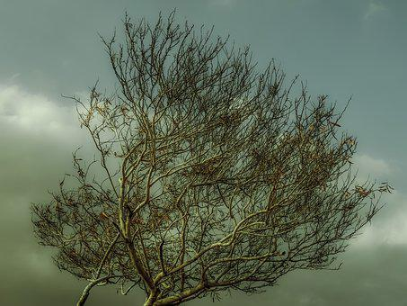 Autumn, Tree, Branch, Sky, Clouds, Nature, Season