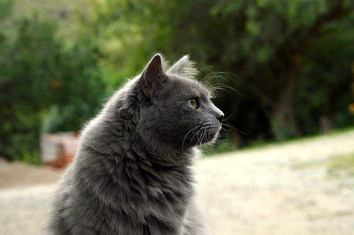 Look, Pets, Animals, Gata, Domestic Feline, Cute Cat