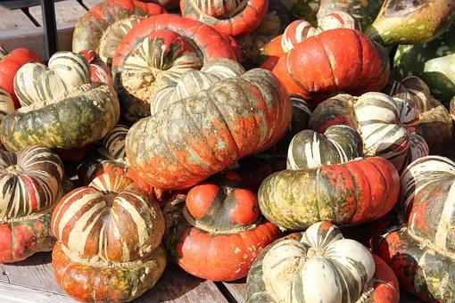 Pumpkins, Gourds, Fall, Autumn, Harvest, Squash