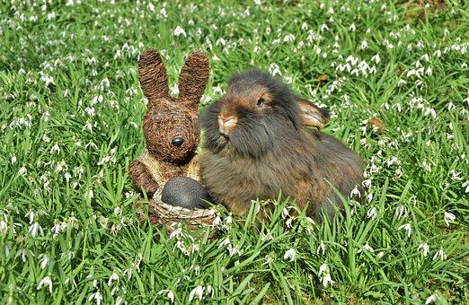 Rabbit, Snowdrop, Amorous Bunny, Beard Rabbit