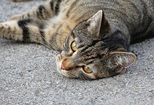 Cat, Cat Portrait, Tiger Cat, Adidas, Close, Mackerel