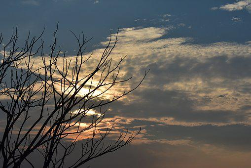 Sunset, Dusk, Clouds, Dry Tree, Sundown, Nature