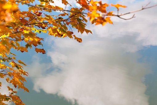 Fall Leaves, Water, Mirroring, Cloud, Autumn, Color