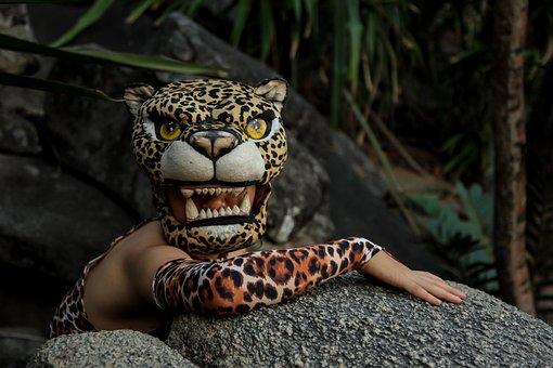 Jaguar, Rocks, Animal, Natural, Costume, Travel