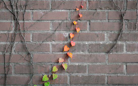 Foliage, Vine, Climbing Plant, Ivy, Clamberer, Creeper