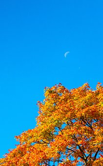 Autumn, Crown, Color, Moon, The Day, Landscape