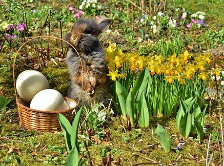 Easter, Easter Bunny, Beard Rabbit, Daffodil