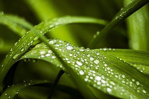 Morning, Dew, Grass, Green, Wet, Nature, Water, Drop
