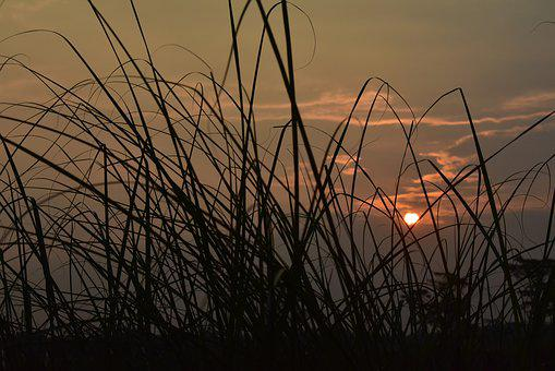 Sunset, Dusk, Twilight, Meadow, Grass, Reeds, Sun