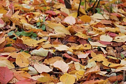Fall Foliage, Leaves, Autumn, Fall Color, Forest