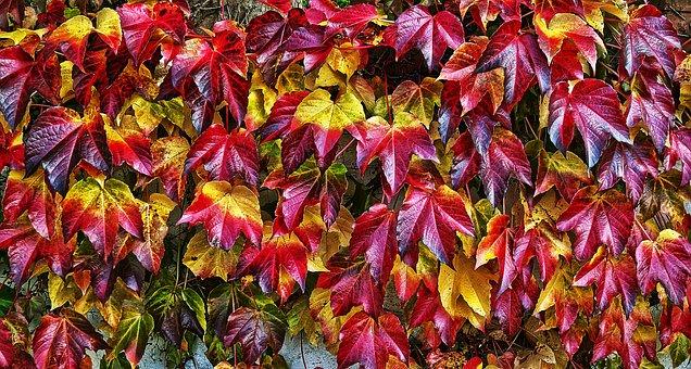 Leaf, Autumn, Fall Color, Leaf Coloring, Sunlight