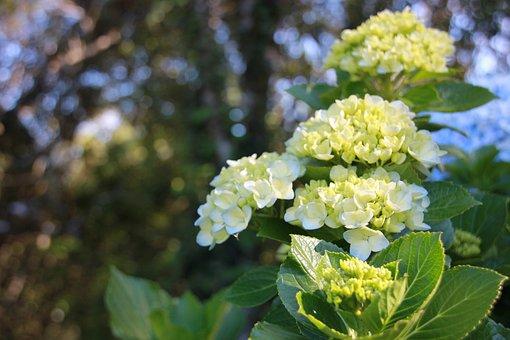 Flower, Flowers, Nature, White Flower