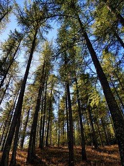 Forest, Sun, Nature, Landscape, Light, Against Day