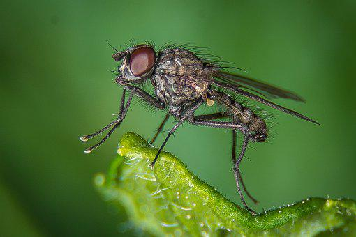 Fly, Macro, Public Record, Insect, Nature, Close