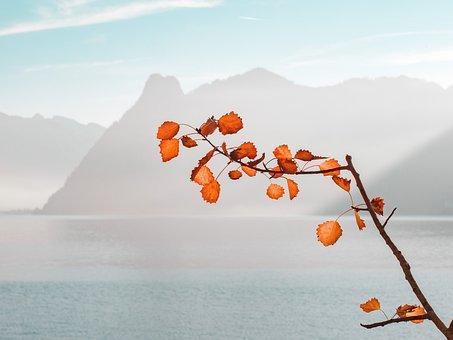 Autumn, Autumn Colours, Lake, Leaves, Mountains