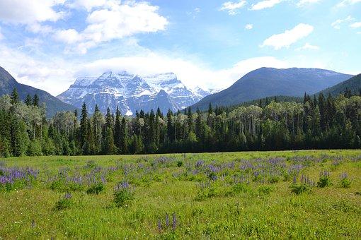 Canada, Nature, National Park, Landscape, Forest, Rest