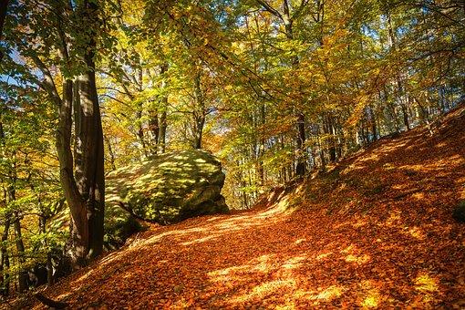 Forest, Autumn, Fall Foliage, Nature, Leaves