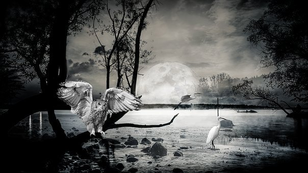 Composing, Lake, Ibis, Owl, Atmospheric, Night, Moon