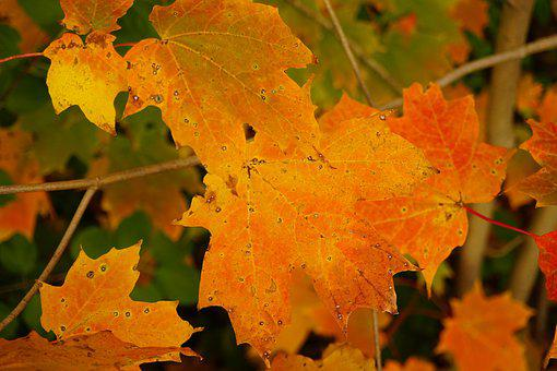Autumn, Colours, Leaves, Orange