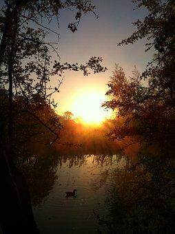Quiet, Outdoor, Nature, Scenic, Dramatic, Duck