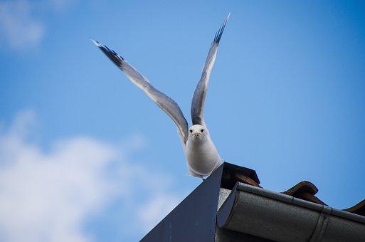 Seagull, Summer, Bird, Wings Outspread, Animal