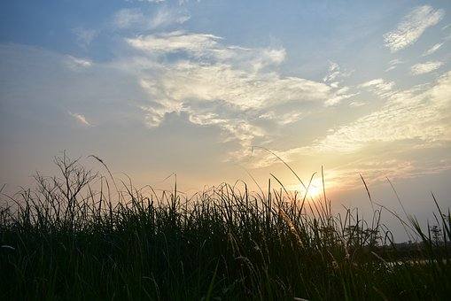 Sunset, Dusk, Clouds, Grass, Reeds, Lakeside, Swamp