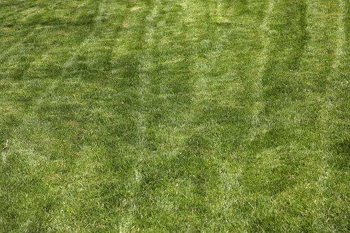 Grass, Terry, Texture, Detail Shots, Green, Macro