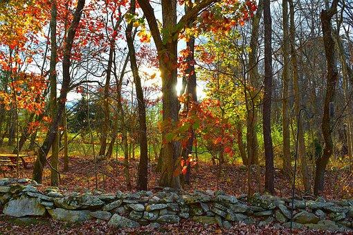 Foliage, Trees, Stone Wall, Autumn, Rural, Season