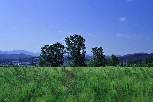 Barley Field, Rural Landscape, Nature