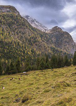 Pasture, Cows, Mountain, Alpine, Bavaria, Mountains