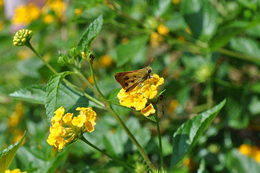 Butterfly, Flowers, Nature, Yellow, Colorful, Life