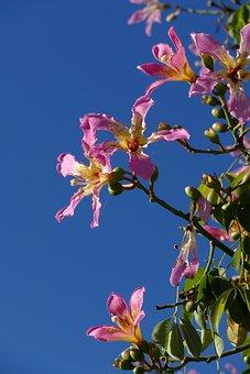Flower, Tree, Flora, Spain, Méditerranée, Pink, Nature