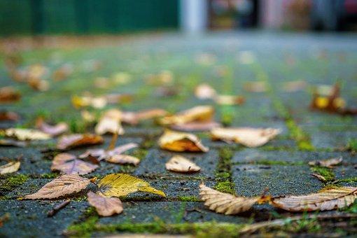 Autumn, Leaves, Close, Nature, Golden Autumn