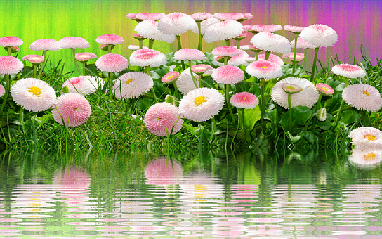 Meadow, Flowers, Summer, Nature, Grass, Garden