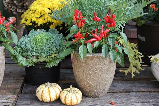Fall, Pumpkins, Peppers, Autumn, Season, Design