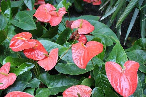 Pink, Flower, Petal, Nature, Floral, Plant, White