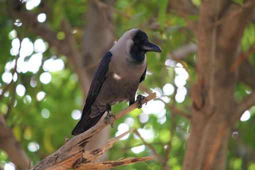 Raven, Bird, Crow, Black, Animal, Nature, Dark