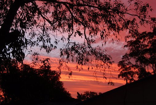 Sunset, Trees, Red, Sky, Orange, Colorful, Silhouette
