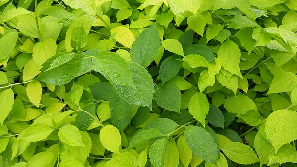 Leaves, Green, Foliage, Green Leaves, Spring, Summer