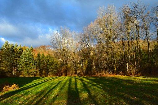 Sunrise, Daylight, Shadows, Trees, Nature, Grass