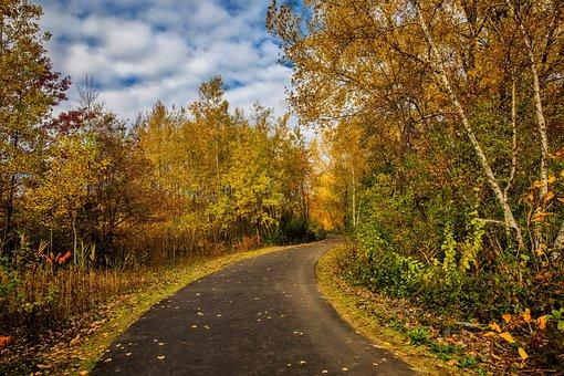 Fall, Foliage, Leaves, Yellow, Orange, Trees, Road