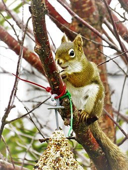 Squirrel, Seeds, Fauna, Tree, Branch, Trunk, Nature