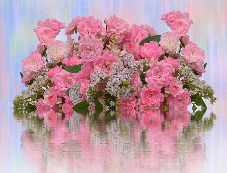 Roses, Love, Pink Roses, Valentine's Day, Flowers